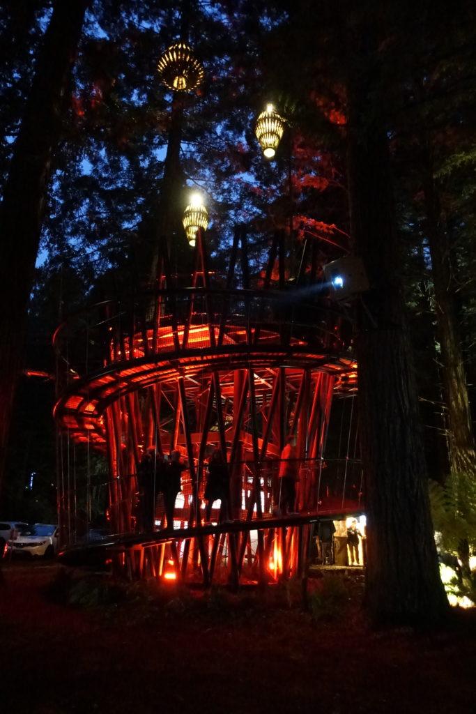 Red Wood Tree Walk - Einstieg